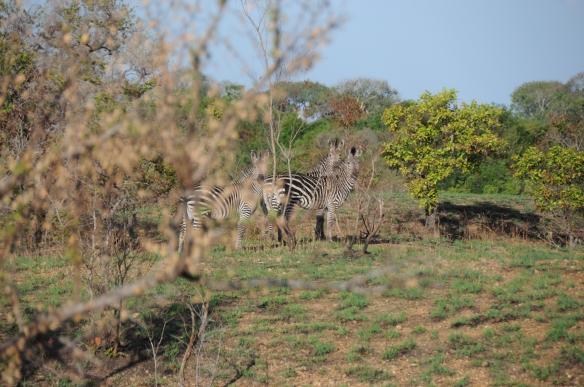 Tanzanie - 291